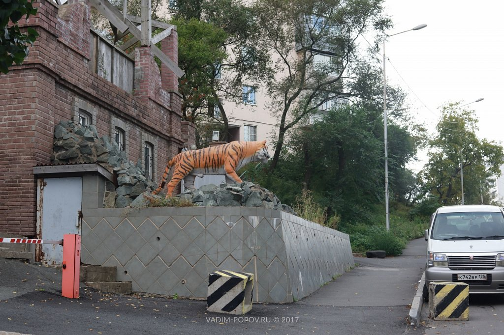 Тигры Владивостока